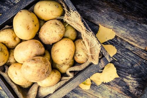 Kartoffel des Jahres 2016 - Nicola