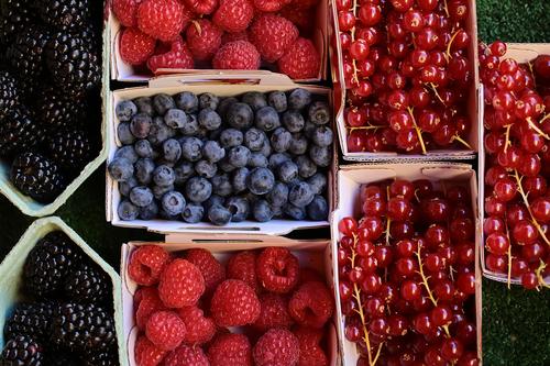 Beeren - Superfoods aus eigenem Garten