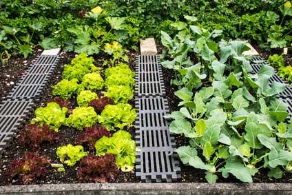 Start ins Gartenglück