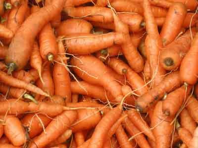 aussortierte Karotten