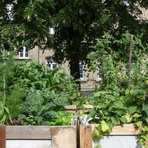urban gardening 12